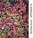 Small photo of Aechmea fasciata in garden thailand, Bromeliad