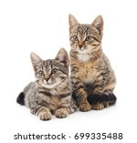 Stock photo two little kittens isolated on a white background 699335488