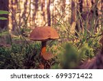 mushrooms in the russian forest | Shutterstock . vector #699371422