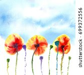 three orange red poppies with... | Shutterstock . vector #699372556