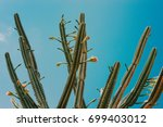 Cactus Outdoor Blue Sky