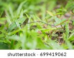 grasshopper on the lawn in the