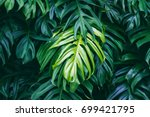 tropical green leaves on dark... | Shutterstock . vector #699421795