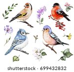 Stock photo set watercolor elements of bird and wildflowers collection garden and wild flowers leaves 699432832