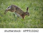 Stock photo running rabbit 699513262