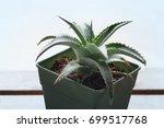 dyckia brevifolia in a pot | Shutterstock . vector #699517768
