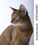Small photo of Abyssinian cat on white background