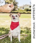 chihuahua park portraits   Shutterstock . vector #699598576