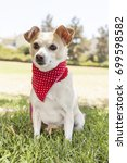 chihuahua park portraits   Shutterstock . vector #699598582