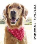 golden retriever park portrait    Shutterstock . vector #699601366
