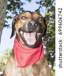 ridge back park portraits   Shutterstock . vector #699606742