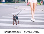 Stock photo beautiful teenage girl walking with a dog on a leash 699612982