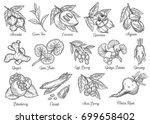 superfood hand drawn vector... | Shutterstock .eps vector #699658402