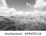 heath in waikato region of new... | Shutterstock . vector #699659116