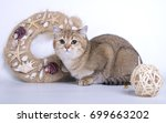 British Shorthair Cat On White...