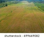 beautiful farmland landscape... | Shutterstock . vector #699669082