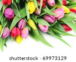 colorful fresh spring tulips... | Shutterstock . vector #69973129