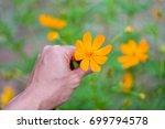 orange starburst flower | Shutterstock . vector #699794578