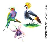 wild exotic birds and flower on ... | Shutterstock . vector #699818452