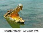 crocodile sharp teeth amphibians | Shutterstock . vector #699835495