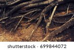 tree roots above the ground ... | Shutterstock . vector #699844072