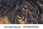 tree roots above the ground ... | Shutterstock . vector #699844096