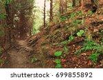 orange ground carpathian forest ... | Shutterstock . vector #699855892