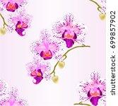 seamless texture  orchid... | Shutterstock .eps vector #699857902