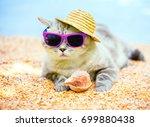Cat Wearing Sunglasses And Sun...