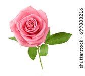 beautiful rose isolated on...   Shutterstock . vector #699883216