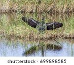 Cormorant Drying It's Wings In...