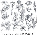 vector collection of hand drawn ... | Shutterstock .eps vector #699954412