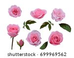 set of rose  flower pink  with... | Shutterstock . vector #699969562