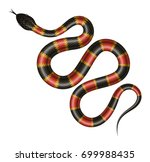 coral snake vector illustration.... | Shutterstock .eps vector #699988435