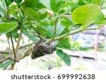 Plant Propagation   Grafting O...
