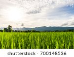 beautiful rice fields over the...   Shutterstock . vector #700148536