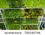 vegetables are planted in pots... | Shutterstock . vector #700160746