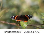 red admiral butterfly  vanessa... | Shutterstock . vector #700161772