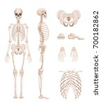 vector illustration of human... | Shutterstock .eps vector #700182862
