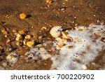 nautilus pompilius sea shell... | Shutterstock . vector #700220902