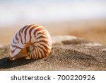 nautilus pompilius sea shell... | Shutterstock . vector #700220926