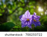 selective focus of eggplant or... | Shutterstock . vector #700253722