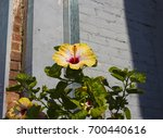 bright yellow suffused with...   Shutterstock . vector #700440616