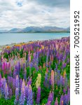 landscape at lake tekapo and... | Shutterstock . vector #700521952