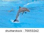 Bottlenose Dolphin In The...