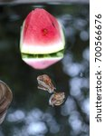 Small photo of Gastropod Achatina two little snails on the mirror with the watermelon.