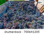 urla  izmir  turkey   august 14 ...   Shutterstock . vector #700641205