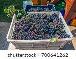 urla  izmir  turkey   august 14 ...   Shutterstock . vector #700641262