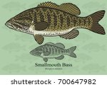 smallmouth bass  smallie.... | Shutterstock .eps vector #700647982