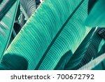 banana palm leaves texture... | Shutterstock . vector #700672792